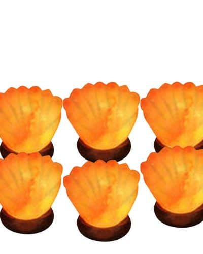 salt lamps shapped like sea shells