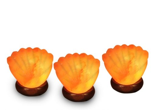 3 sea shell salt lamps specia value pack