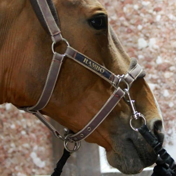 Horse HaloGenerator for Equine Therapy